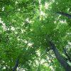 ゆば・とうふ工房おしとり「おしとりの泉」 – 佐賀県神埼市神埼町城原